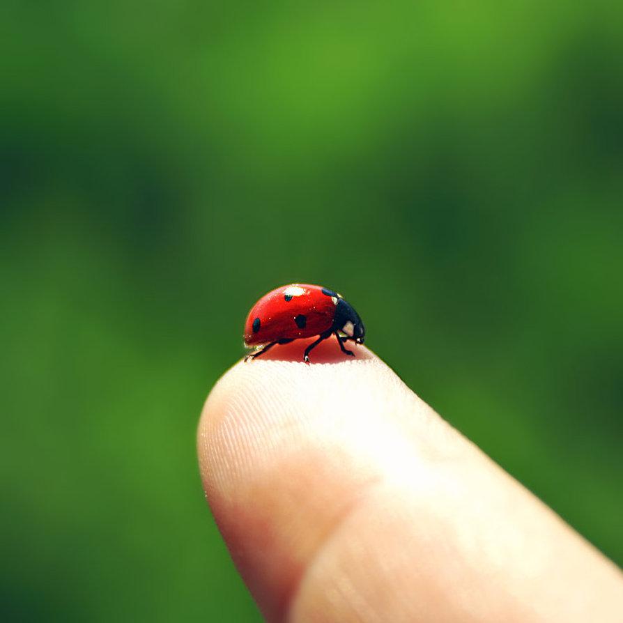 Coccinella portafortuna sul tuo dito